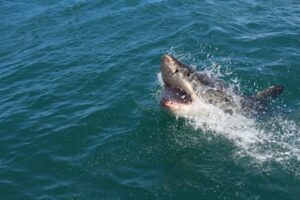 Read more about the article Pain Lesson from a Shark Attack